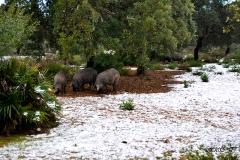 nevada-en-arcos-enero-2017-10
