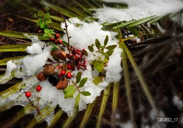 nevada-en-arcos-enero-2017-3
