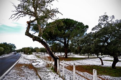 nevada-en-arcos-enero-2017-6
