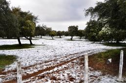 nevada-en-arcos-enero-2017-7